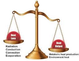 Heat Balance Chart A Schematic Chart On Human Thermal Balance Download