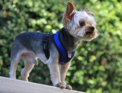 No Choke Mesh Dog Harness By Gooby This Gooby Comfort