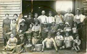 Grape pickers at Keinbah, NSW, [n.d.]. Back row, second from right is Bill  Barnard. Ethel Hawkins is seated, second from the left, in the dark dress  and hat.   Living Histories