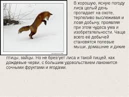 Доклад на тему лиса как они охотятся ru оптом спортивную одежду москва