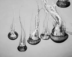 wall art ideas design popular item jellyfish animal ocean white black unique extraordinary beautiful nautical sea