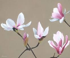 wall arts magnolia wall art art artist painting magnolia painting pink white magnolia flower magnolia