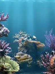 Free Download Fish Tank Aquarium Wallpaper Aquarium