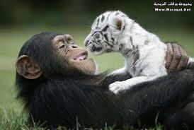 صور حيوانات اليفة images?q=tbn:ANd9GcT