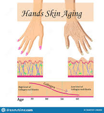 Hands Skin Aging Vector Illustration With A Chart