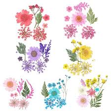 12Pcs <b>Real Pressed Flowers</b> Anne's Lace <b>Dried Flowers</b> For Resin ...