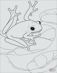 tree frog template frogs coloring pages five little speckled frogs coloring page tree