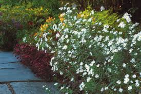 great plants for a fall cutting garden