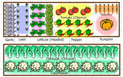 Small Picture Territorial Seed Vegetable Garden Planner
