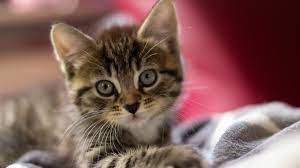 96+] Cute Kittens HD Wallpapers on ...