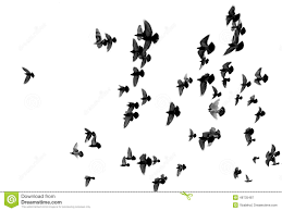 birds flying in the sky silhouette. Exellent Birds Silhouettes Of Pigeons Many Birds Flying In The Sky To Birds Flying In The Sky Silhouette Y