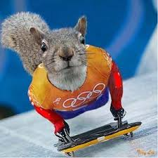 olympic skeleton racing google search sports olympic games  olympic skeleton racing google search