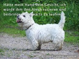 Hundesprüche Top 20 Die Besten Sprüche über Hunde Spruechenet