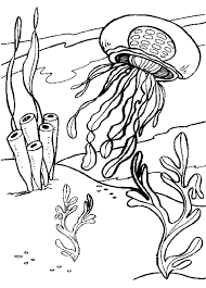 jellyfish coloring pages throughout great jellyfish coloring page 89 for your free coloring book with