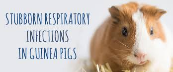 stubborn respiratory infections in