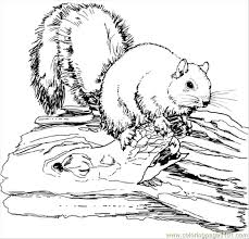 Small Picture Squirrel Animal Coloring Pages Coloring Page Free Squirrel