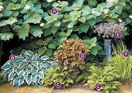 2 shade garden combos for hosta