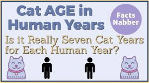 Cat Years Chart Calculator Cat Years Calculator Cats Age To Human Years Petcare