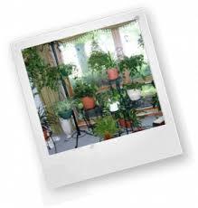 Комнатные растения в интерьере квартиры реферат в качестве мини  какие растения выращивать дома