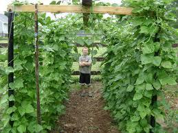 backyard gardening. Unique And Sustainable Backyard Gardening Ideas