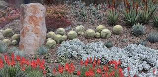Succulent Garden Designs Magnificent A Z List Of Succulents For Garden And Container Nurseries Online