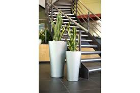 office plant displays. Wonderful Office Office Plant Displays Outdoor Landscaping By Ambius Displays For Office Plant Displays
