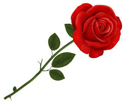 Happy Rose Day 2020 Wishes, Images, GIF ...