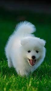 Cute Dog Images Hd - 1080x1920 ...