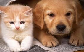 cute pets backgrounds 02 01 2017 74 59 kb