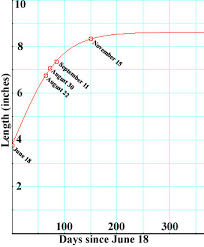 Size And Growth Rate Of Lucilla