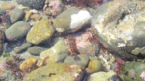 Take Advantage Of Low Tides By Visiting The Tide Pools