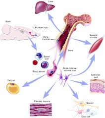 site map writers health images stem cells jpg