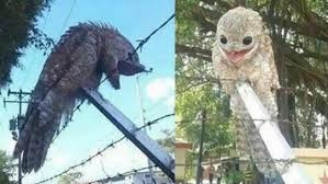 plucked owl.  Owl A Brazilian Scientist Was Allegedly Hoist By His Own Petard When Eyes  Were Plucked Out A Prehistoric Species Of Owl He Had Cloned And Plucked Owl