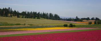 at silver falls seed we strive to bring you top quality flower wildflower native forage and grass seeds for your farm landscaping lawn or garden