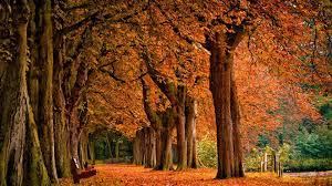 1920x1080 HD Autumn Wallpapers (61 ...