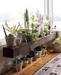 Interior Design: Simple Indoor Plant In Living Room - Scandinavian Garden