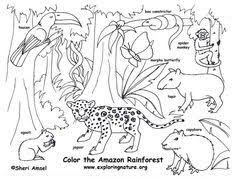 Small Picture 29 best Coloring Habitats and Animals images on Pinterest Animal