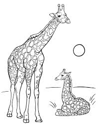 Small Picture Free Giraffe Coloring Page