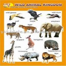 What Are The Animal Kingdoms Chart 3d Wall Chart Wild Animal Kingdom Global Sources
