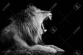 lion roaring black and white. Contemporary Roaring Lion On Dark Background Black And White Image Stock Photo Inside Roaring And White H