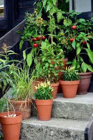 container garden vegetables. Download Container Garden Vegetables Plants In Pot. Stock Image - Of Growing, T