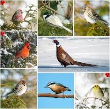 Международный день птиц апреля История и особенности  Международный день птиц