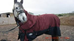 medium weight detachable neck turnout rug