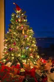Photo of a Christmas Tree, a traditional decoration during the holiday  season.