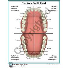 Tooth Reference Chart