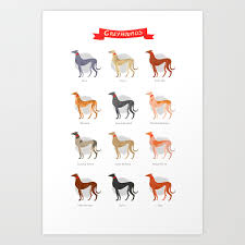 Brindle Color Chart Greyhound Color Chart Art Print