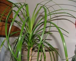 ... Large-size of Cozy Common Tropical House Plants Tropical Plants That  Grow Very Similiar Tropical ...