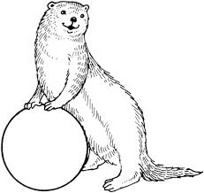 Otter Met Bal Kleurplaat Gratis Kleurplaten Printen