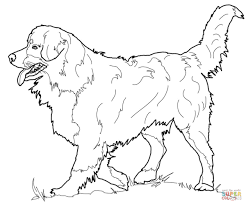 Bernese Mountain Dog coloring page | Free Printable Coloring Pages