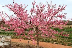 Cosa può esistere di più bello e mirabile degli alberi con i fiori? Alberi Da Fiore Alberi Alberi Con Fioritura
